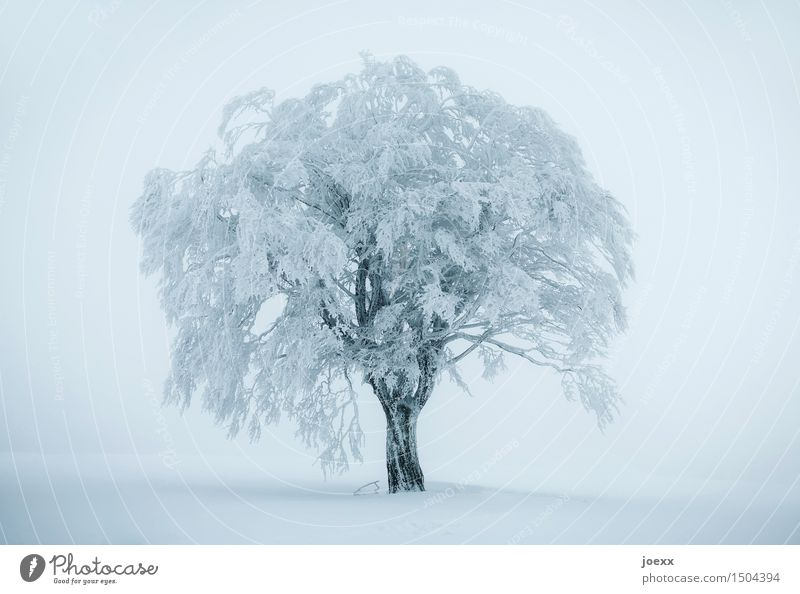 Too cold Winter Fog Ice Frost Snow Snowfall Tree Large Cold Blue Black White Colour photo Subdued colour Exterior shot Deserted Day Shallow depth of field