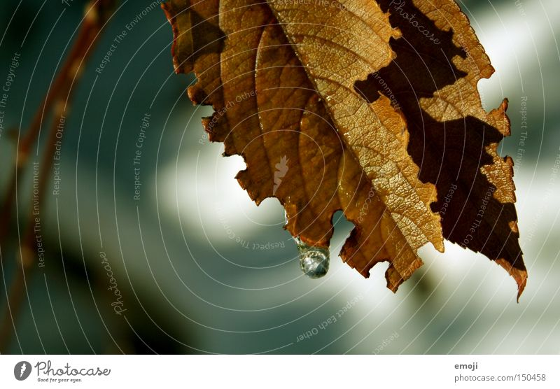 ° Leaf Autumn Plant Nature Brown Drops of water the last warm rays of sunshine in autumn before winter comes