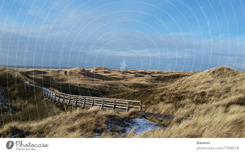 Dune in blue Environment Nature Landscape Plant Sky Clouds Horizon Winter Beautiful weather Ice Frost Grass North Sea Island Amrum Deserted Hiking Infinity