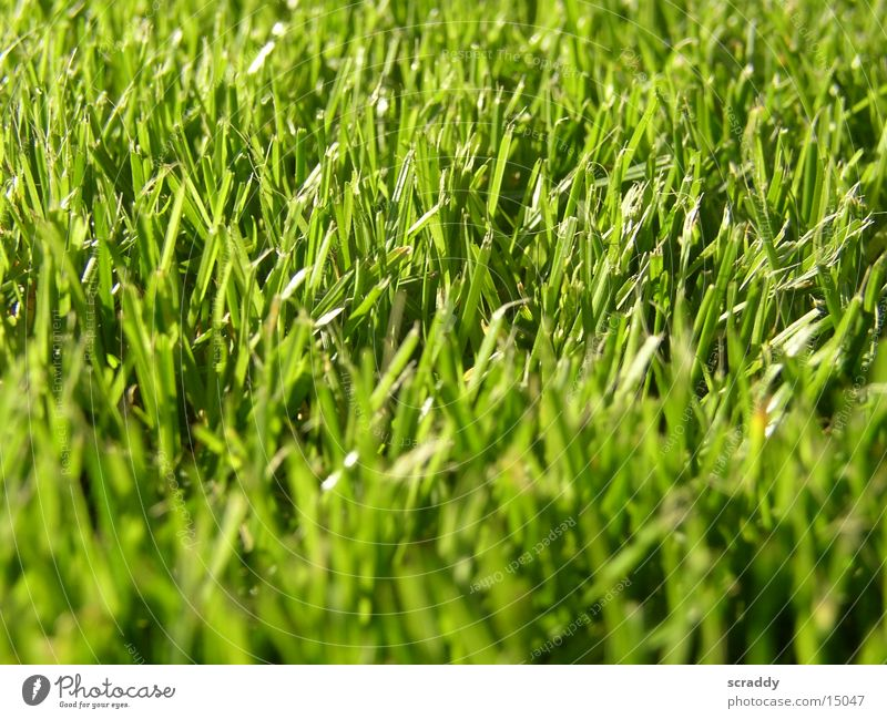 Green Meadow Grass Field Blade of grass Juicy