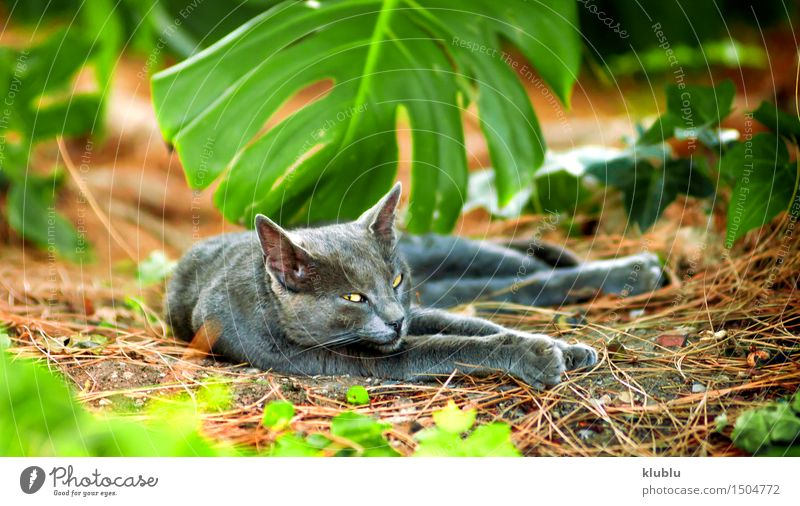 An street cat resting Cat Nature City Beautiful White Loneliness Animal Black Street Funny Playing Small Gray Stone Friendship Hair