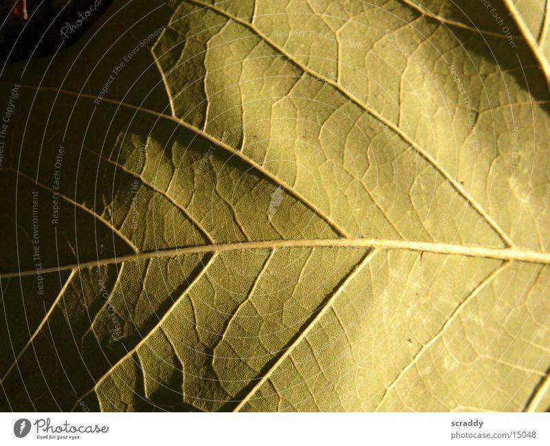 Leaf Dark Bright Brown Progress Vessel Dim