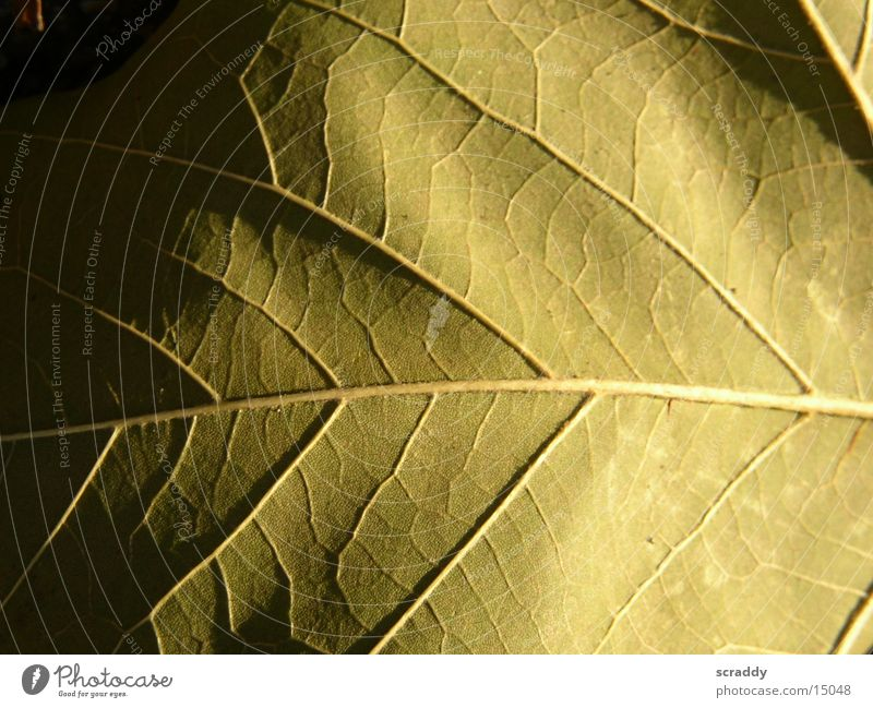 leaf Leaf Brown Vessel Dim Progress Dark Structures and shapes Bright Shadow