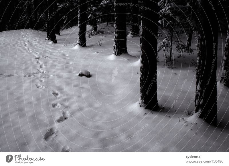 Tracks in the snow Frozen Winter Cold Frost Nature Snow Ice Freeze Tree Forest Dark Stranger Existence Calm Row
