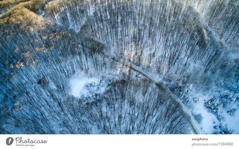 Aerial view of a deciduous forest with high trees and road in the winter Sun Winter Snow Mountain Nature Landscape Tree Forest Street Freeze Blue White Curve