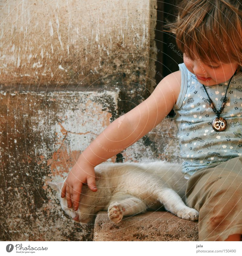 Cat Human being Child Vacation & Travel Summer Animal Love Boy (child) Together Friendship Masculine Warm-heartedness Trust Toddler Sympathy Caresses