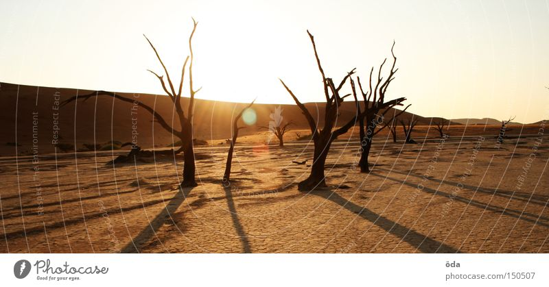 Dead Vlei Desert Tree Death The Grim Reaper Dry Shadow Branchage Namibia Sossusvlei Namib desert Loneliness Land Feature Africa Crack & Rip & Tear