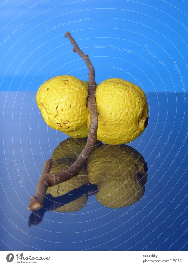 Blue Yellow Fruit Branch Obscure Dried up Quince