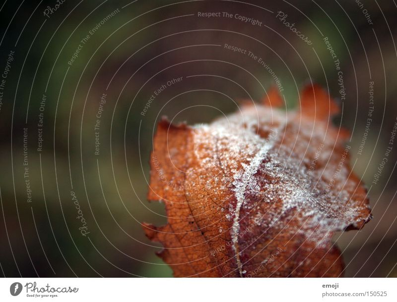 Nature Plant Leaf Cold Rope Frost Frozen