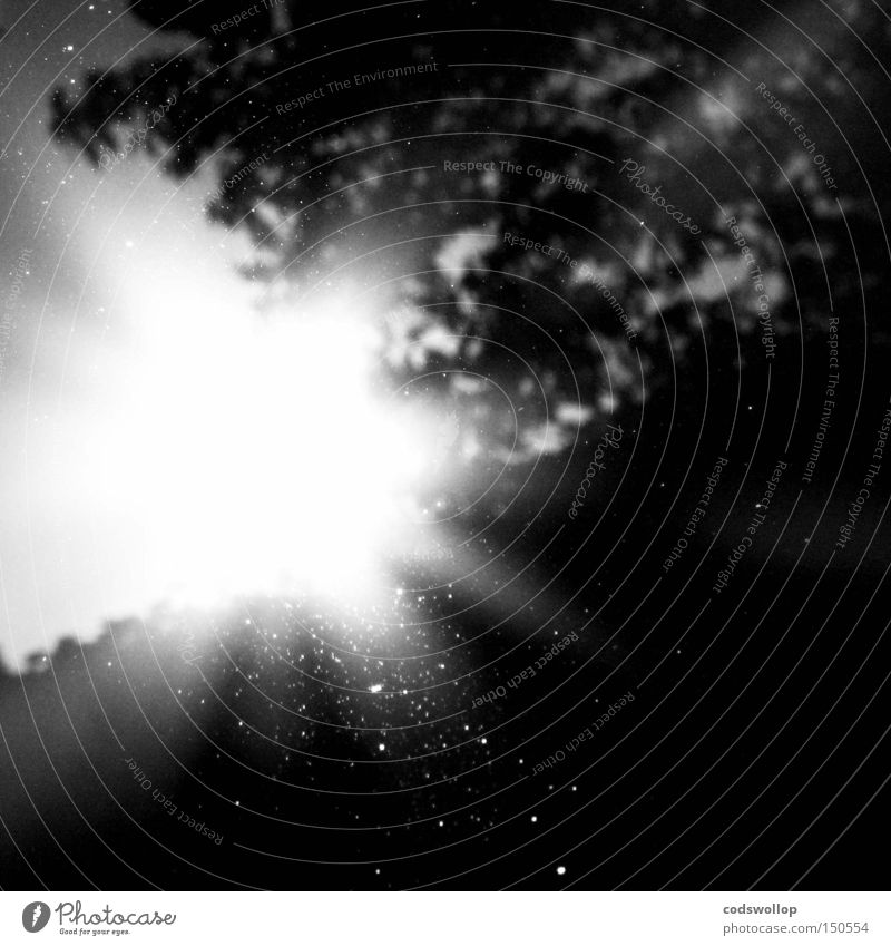 360 degrees and 2 pi radians Summer Celestial bodies and the universe Black & white photo sun shine reflection tree sunbeam light bright morning sunrise