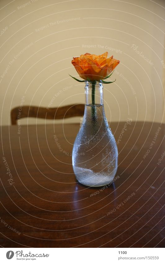 Plant Flower Blossom Table Chair Decoration Stalk Bottle Household Vase Foliage plant Packaging Tabletop Flower vase