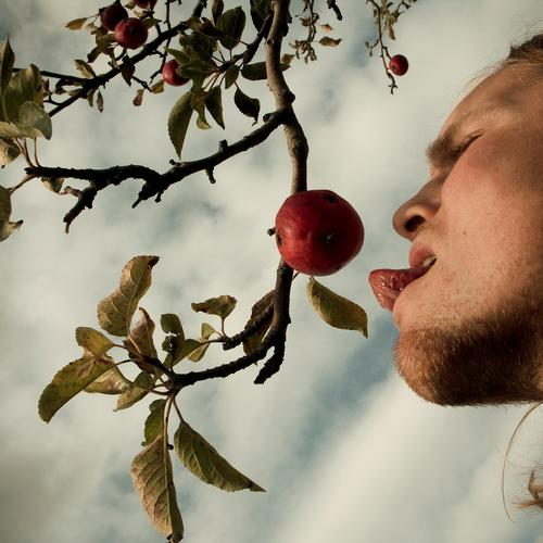 temptation Attempt Fruit Apple Tongue Appetite Costs Sense of taste Healthy Nutrition Biblical Authentic Nature Instinct Transience Eating Alluring