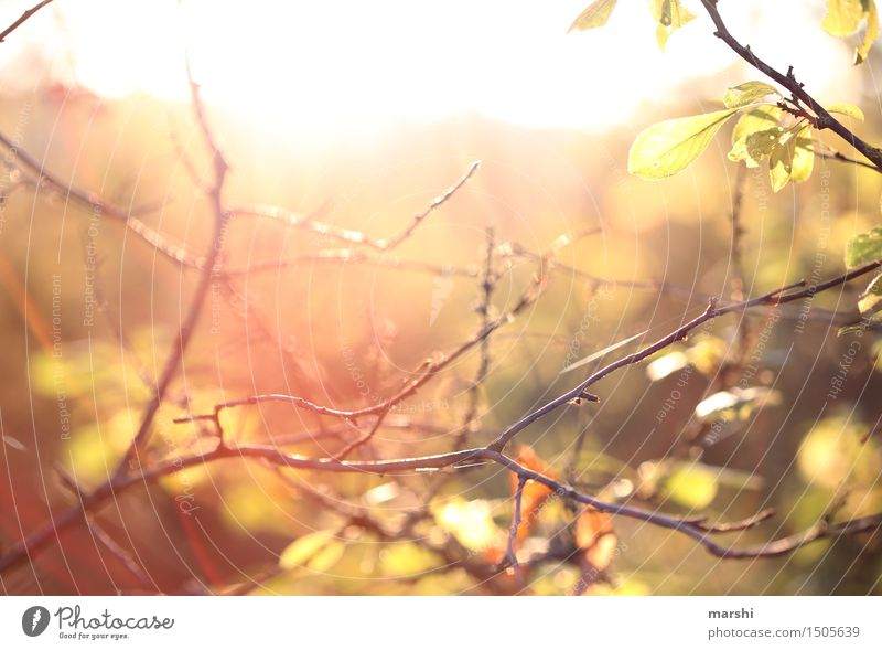 Nature Plant Summer Sun Environment Warmth Autumn Moody Bushes Branch Autumnal Warm light