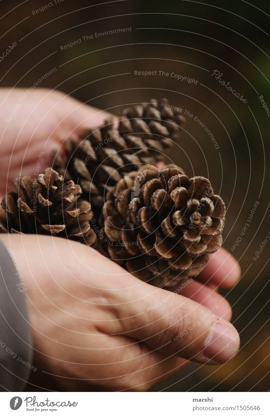 hands full Nature Plant Autumn Moody Hand Forest Cone Brown Collection Colour photo Exterior shot Detail Day Pine cone Indicate Thumb