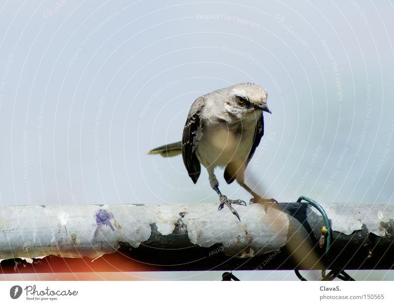 weird bird Bird Queer fish Animal Sky Superior Loneliness Rod Mistrust Anger Aggravation ClavaS. ill-humoured