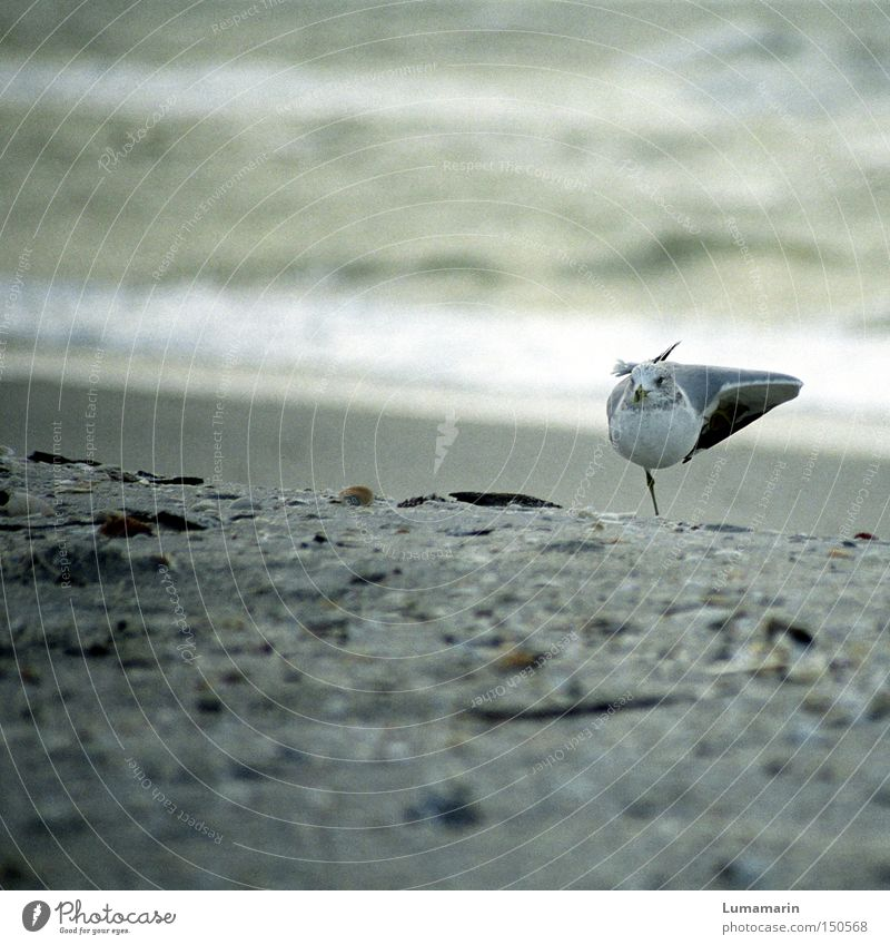 Water Ocean Beach Calm Relaxation Sand Coast Bird Contentment Concentrate Seagull Gymnastics Environment