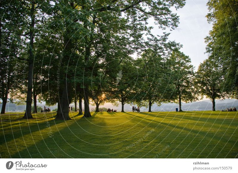 Human being Tree Sun Green Relaxation Lawn Dusk Evening sun