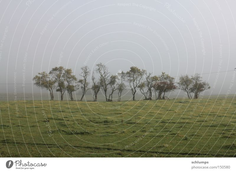 little group Tree Fog Autumn Mecklenburg-Western Pomerania Landscape Morning Meadow Green Bushes