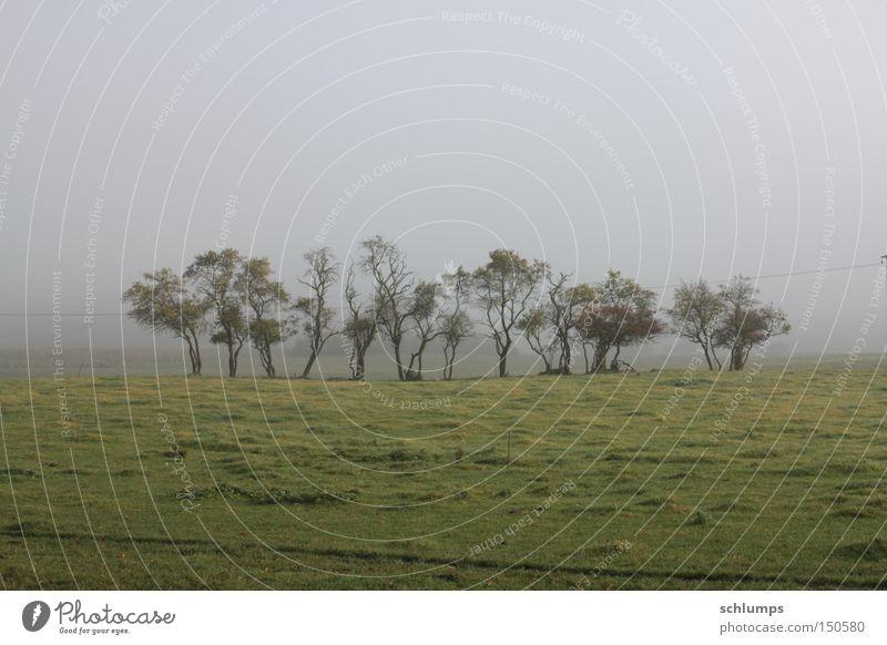 Tree Green Autumn Meadow Landscape Fog Bushes Mecklenburg-Western Pomerania