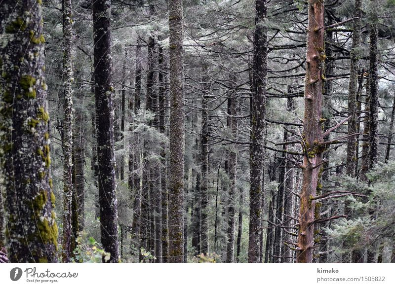 Model Forest Nature Vacation & Travel Plant Beautiful Tree Relaxation Loneliness Joy Winter Forest Mountain Environment Grass Healthy Tourism Air