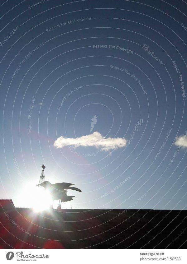 Sky Blue Sun Clouds Winter Black Cold Wall (barrier) Religion and faith Bird Under Seagull Judder