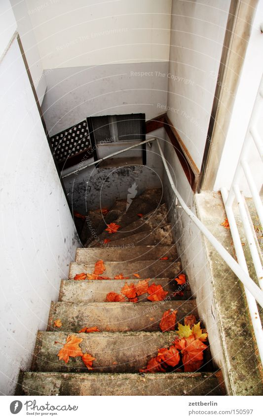 cellar entrance Stairs Cellar Hidden Hiding place Supply Storage House (Residential Structure) Living or residing Handrail Banister Autumn Downward Descent