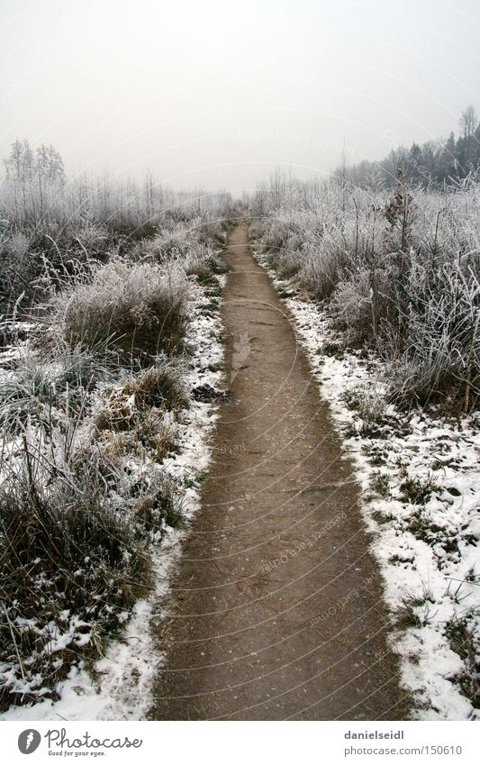 Frost in January Cold Loneliness Lanes & trails Target Snow Grief Gloomy Winter Sadness