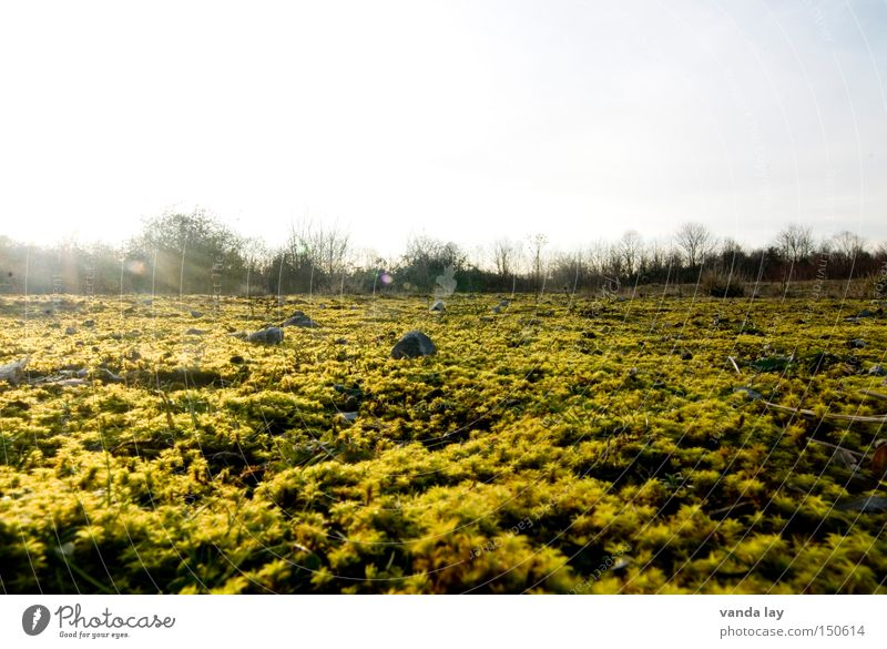 morning glory Moss Landscape Floor covering Ground Tree Gold Structures and shapes Beautiful Bushes Stone Horizon Autumn Mountain Minerals Cover Nature