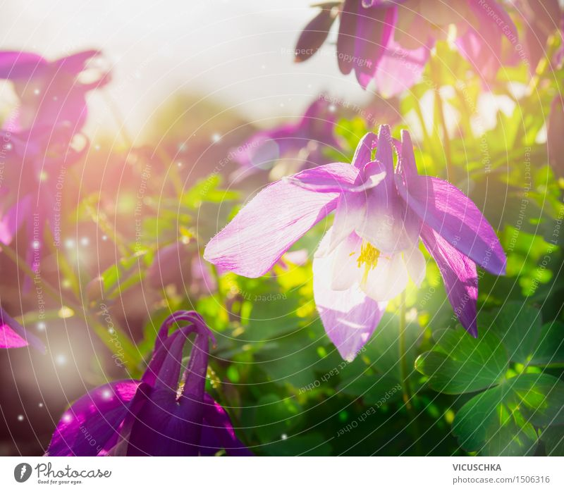 Nature Plant Green Summer Flower Joy Yellow Spring Background picture Garden Pink Design Park Blossoming Beautiful weather Violet