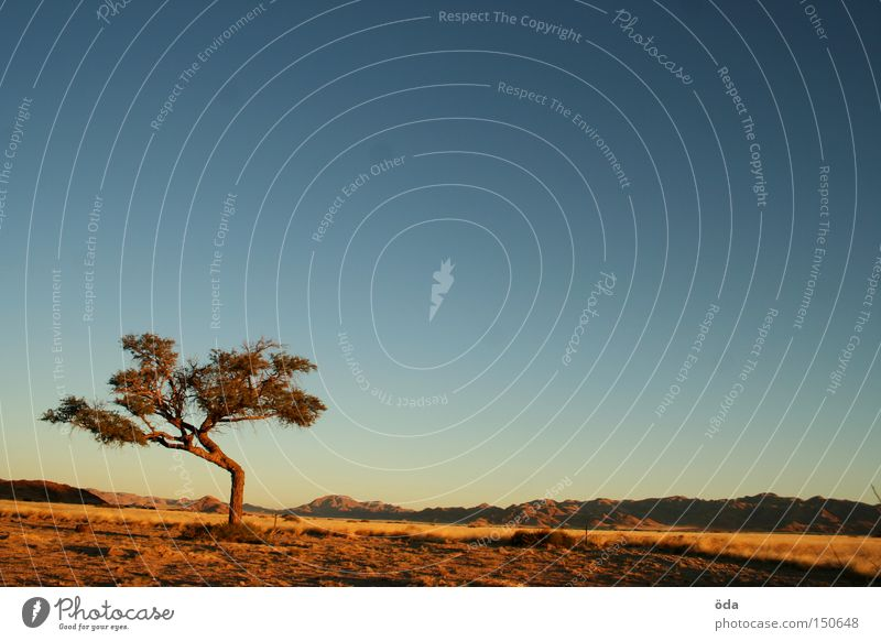 Look, a tree! Tree Sky Far-off places Landscape Africa Namibia Vantage point Moody Evening Loneliness