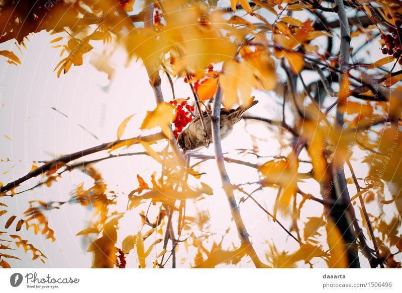 sparrow Nature Plant Tree Leaf Animal Joy Life Autumn Style Playing Garden Freedom Moody Bird Design Park