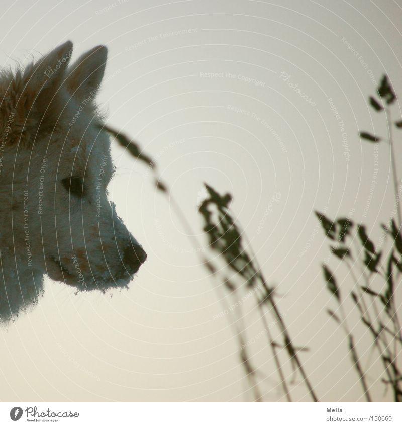Animal Cold Dog Grass Head Nose Ear Animal face Mammal Pet Snout Snow Snow crystal