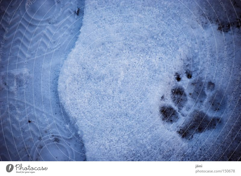 Human being Winter Animal Snow Freedom Dog Feet Together Adventure Tracks Footprint Mammal Converse Wolf Wilderness