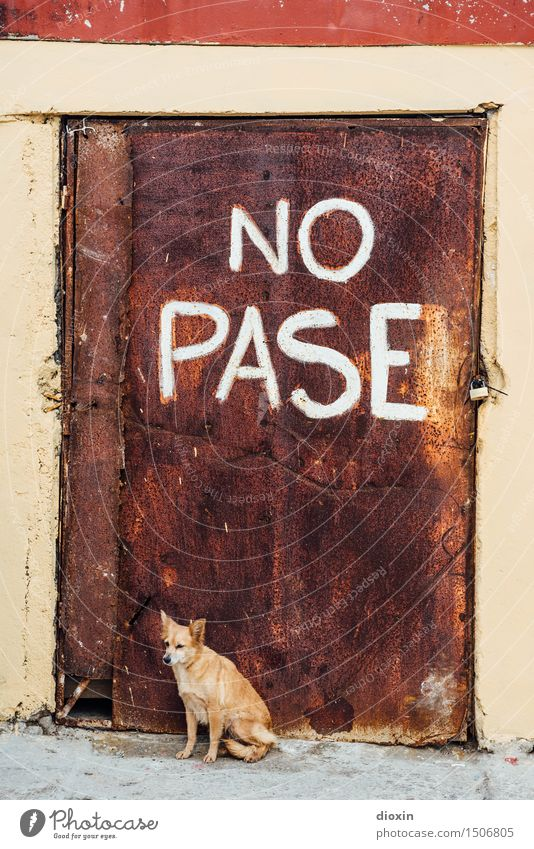 NO PASE Cuba South America Central America Caribbean Door Animal Pet Dog Watchdog 1 Padlock Rust Metal Characters Signage Warning sign Prohibition sign Old