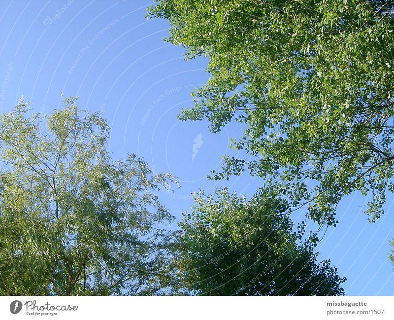 trees Tree Green Summer Sky Blue Sun Bright