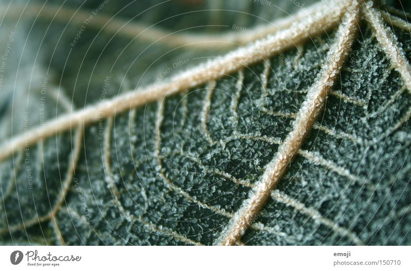 veins Leaf Nature Plant Frost Cold Frozen Green Vessel Macro (Extreme close-up) Close-up cold snap Rope