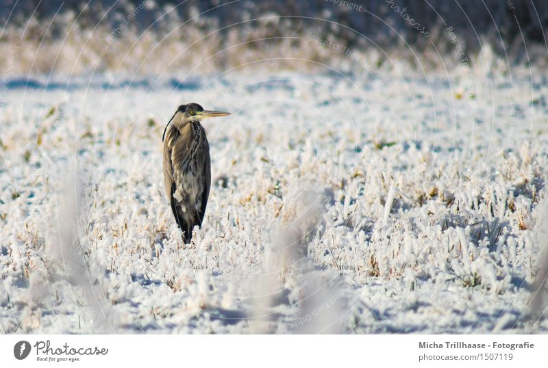 Nix los here Winter Snow Environment Nature Animal Sunlight Beautiful weather Ice Frost Grass Meadow Wild animal Bird Animal face Wing 1 Observe Flying Freeze