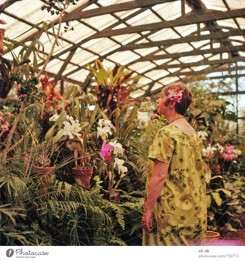 flower power Garden Woman Adults Flower Orchid Park Romance Seventies Greenhouse Market garden Dreamily Hippie Iconic The fifties Colour photo Interior shot Day