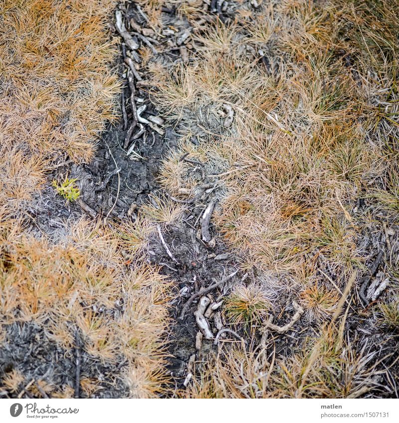 Total on the ground Nature Plant Earth Grass Moss Wild plant Brown Yellow Gray Black Knoll Branch Lichen Colour photo Subdued colour Exterior shot Close-up