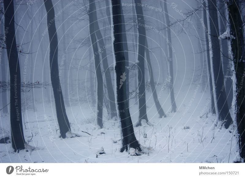 StagePicture Forest Undergrowth Dark Tree Fog Snow Cold Fairy tale Mystic Witch Eifel Winter Tree trunk Fear Panic