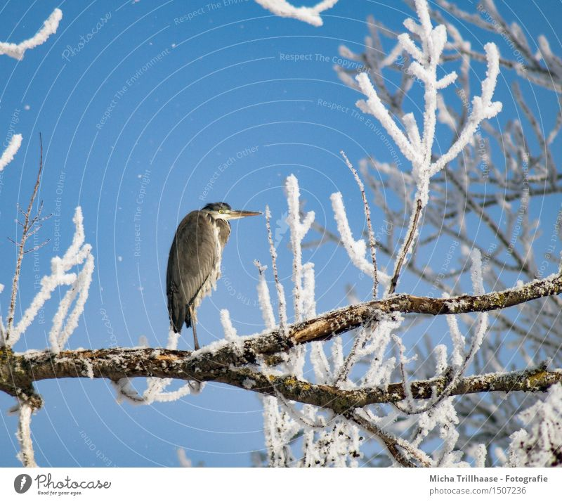 Sky Nature Tree Relaxation Animal Winter Cold Environment Snow Natural Flying Bird Weather Ice Wild animal Sit