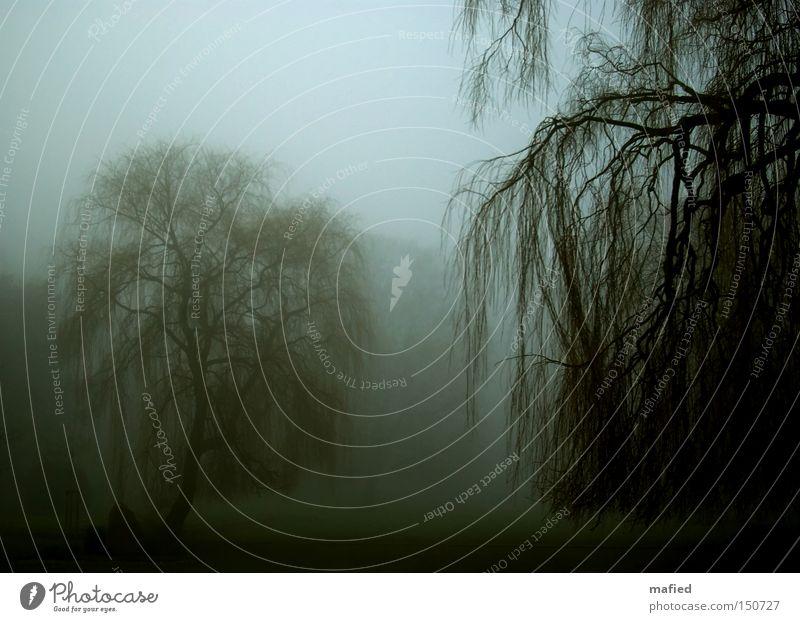 Blue Green Tree Loneliness Calm Winter Dark Sadness Death Gray Garden Park Fog Branch Grief Twig