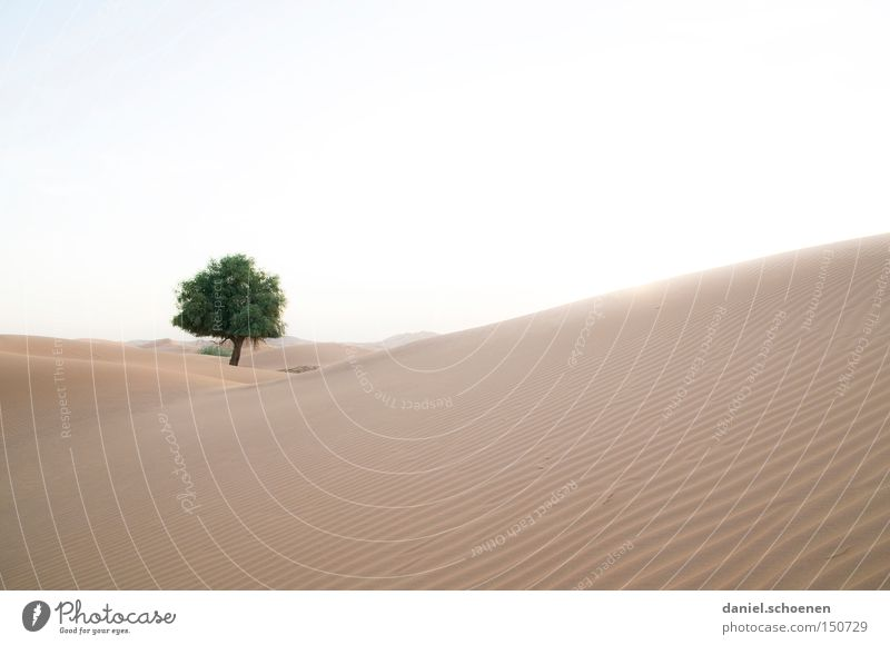 Sky Tree Warmth Sand Wind Environment Africa Climate Desert Dune Dubai Expedition Arabia Near and Middle East Oman