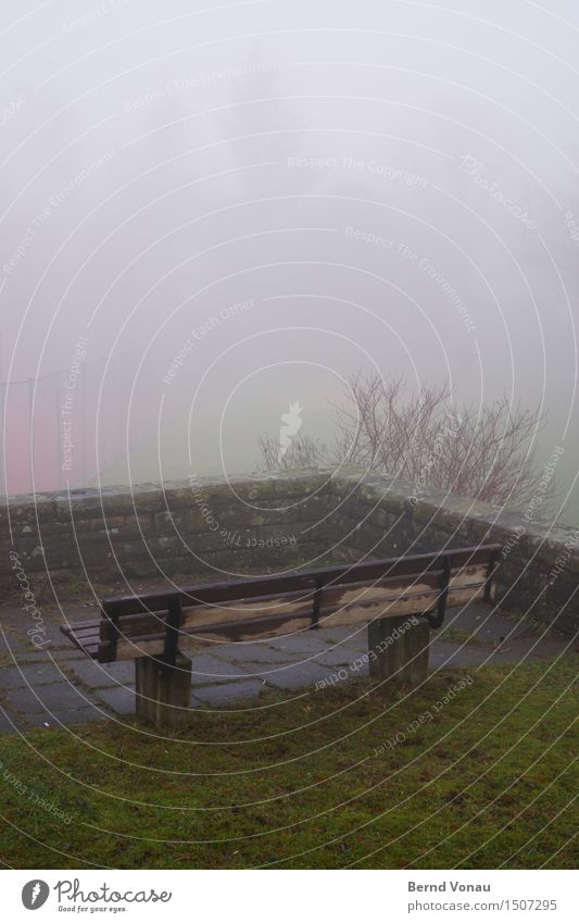 gallery Environment Nature Autumn Bad weather Grass Bushes Small Town Emotions Moody Sadness Vantage point Bench Damp Comfortless Wall (barrier) Above