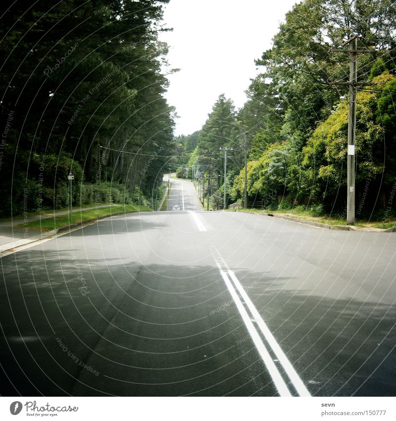 Take me home, country roads Street Median strip Forest Green Motor vehicle Fir tree Asphalt Concrete Curb Lawn Tree Across Diagonal Far-off places