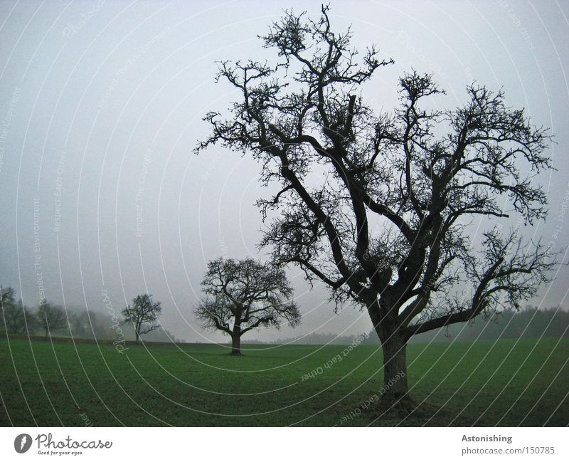 Nature Green Tree Black Landscape Dark Meadow Cold Autumn Gray Fog Branch Tree trunk Twig Treetop Bad weather