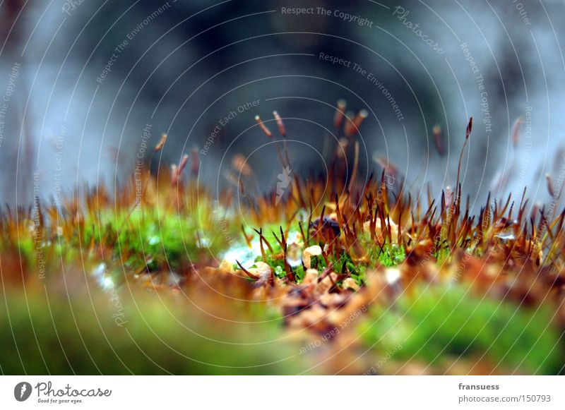 tomb whispering Moss Growth Detail Grass Close-up Cold Green Sprout Plantlet Autumn Macro (Extreme close-up) Blur Limp