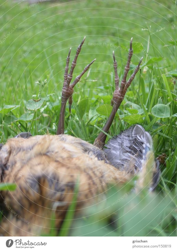 Animal Death Bird End Lie Transience Crash Helpless Sacrifice Prey