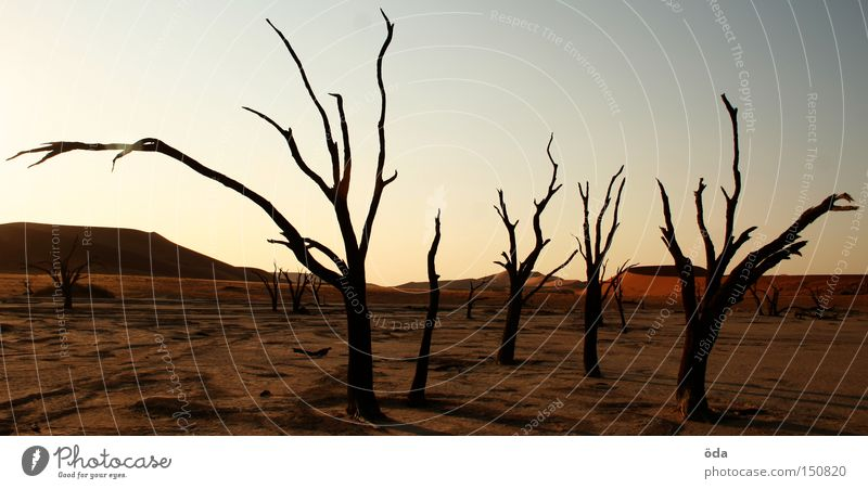 Apocalypse now Desert Tree Death Shriveled Dry Shadow Twig Branch Namib desert Loneliness Dune Environmental pollution Africa dead namibia