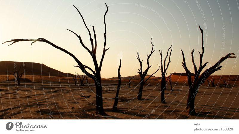 Tree Loneliness Death Environment Africa Desert Branch Dry Dune Twig Environmental pollution Shriveled Namib desert